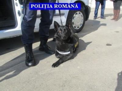 caine politist 1
