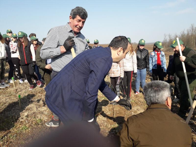 Ministru la Șomcuta Mare. Autoritățile au plantat stejari