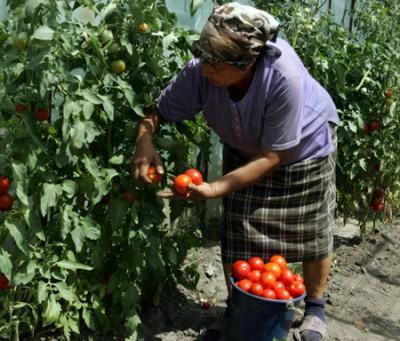 Ministrul Agriculturii se intalneste astazi cu fermierii maramureseni