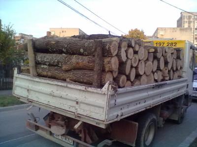 Şomcutean amendat pentru transport ilegal de lemne