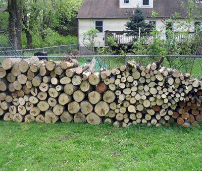 Ilegalităţi cu lemne la Vişeu şi Lăpuş