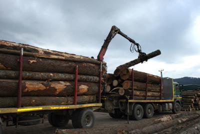 Controale pentru depistarea transporturilor ilegale de material lemnos
