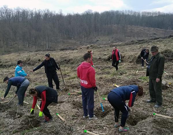 5.000 de puieți plantați la Șomcuta Mare